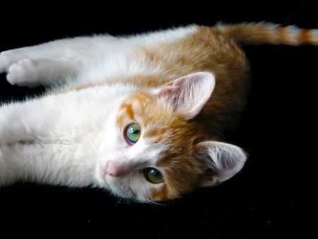 Portrait of domestic red kitten, 4 months old. Close up photo of red cat with green eyes looking straight to the camera Imagens