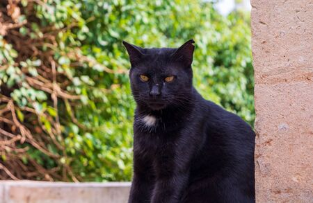 Cats of Malta. Stray black cat sitting on the porch at the entrance to one of the St. Pauls Catacombs in Rabat, Malta.