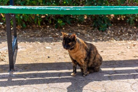 Cats of Malta - stray short-haired tortoiseshell cat sitting under the green bench lit by warm summer sunlight at the Independence Garden park in Sliema, Malta.