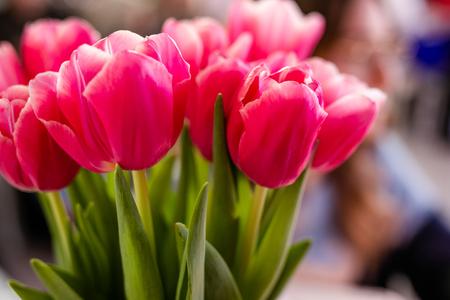 Close up of tulip flowers.