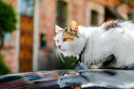 Tricolored cat sits on the car roof on a tree background