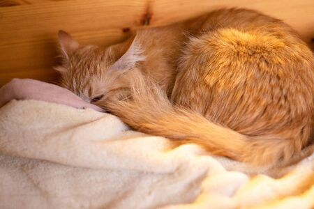 little nice ginger cat sleeping on couch.