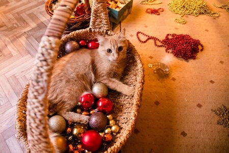little nice ginger cat sleeping on couch arond new year decorations.