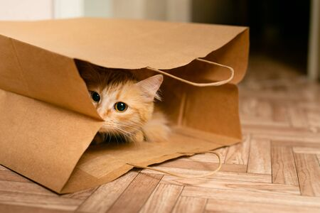 Cute baby kitten sitting inside of brown paper grocery sack. Stock Photo