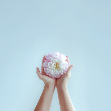 Women's hands stretch out delicate flower. Concept of psychology of relationship. 版權商用圖片