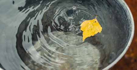 Yellowed birch leaf floats on the surface of the water in a tin bucket under raindrops. Concept