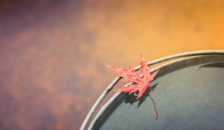 Wet red maple leaf lies on the edge of the tin bucket . Top view, copy space. The concept of