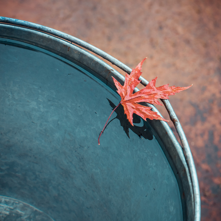 Beautiful wet red maple leaf on the edge of the tin bucket with water. Place for text, top view. The concept of