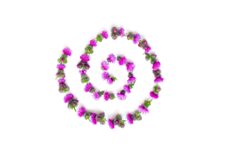 Flower curl made of pink flowers and thorns of a Thistle.