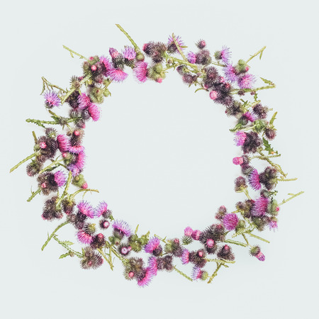 Flowers composition. Round frame made of green branches of Thistle with thorns and blossoming tender crimson flowers on white background. Flat lay, top view, copy space. Toned. Valentine's or wedding background.