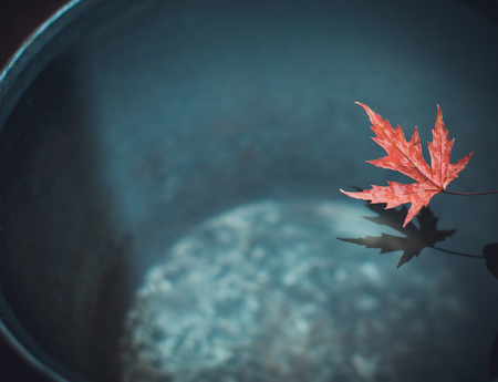 A beautiful carved sheet of red maple over a bucket of water casts a shadow on its surface.