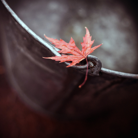 Beautiful red maple leaf on the edge of a tin bucket with water on autumn background. Space for text, top view. Autumn calm and melancholy. Soft focus.