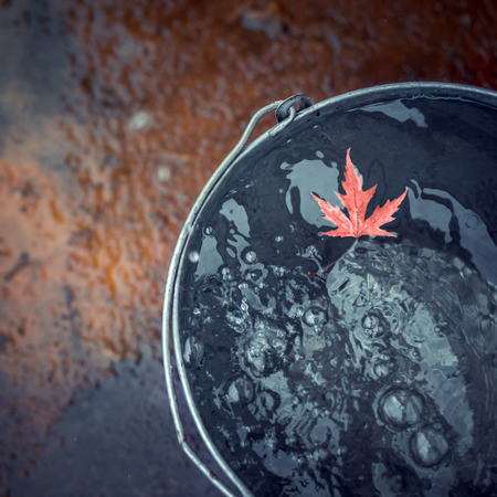"""A beatiful red maple leaf floats in a tin bucket on the water surface, on which rain drops fall. Top view, copy space. Concept """"Autumn has come""""."""