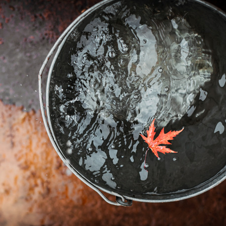 A red maple leaf floats in a tin bucket on the surface of the water with falling raindrops. Top view. Concept
