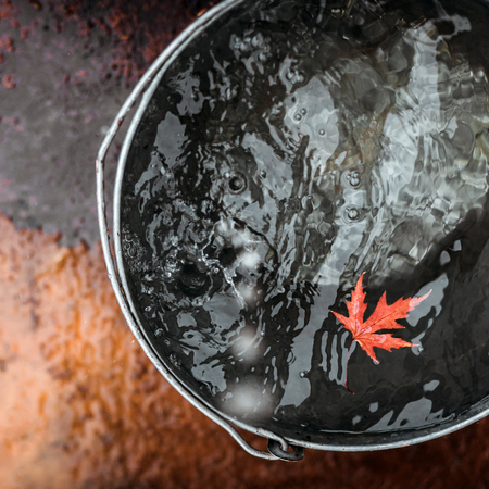 A red maple leaf floats in a tin bucket on the surface of the water with falling raindrops. Top view. Concept Autumn has come.