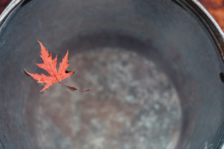 """A lovely red maple leaf floats on the surface of the water in a tin bucket. Top view. Concept """"Autumn has come""""."""