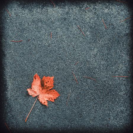 Autumn fallen maple leaf lies on the grainy asphalt. Top view, space for text.