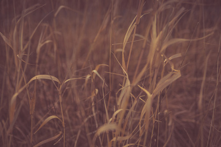 Dry grass, swaying in the wind. Background Stock Photo