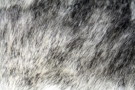 faux: Chiuda sulla foto di pelo bianco e nero Faux