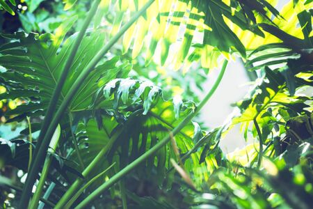 Monstera jungle leaves abstract