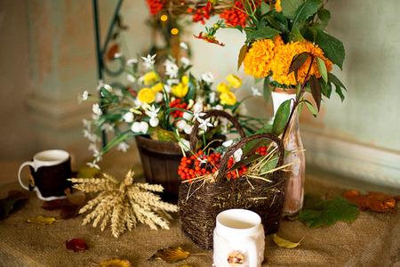 greening: autumn scenery, autumn flowers, mountain ash Stock Photo