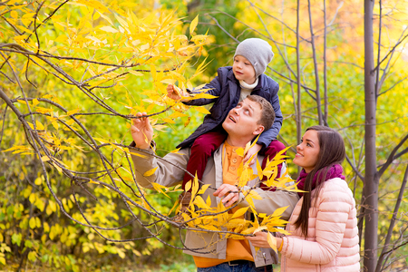 Mother and Father With Young Son On Shoulders Autumn Park collect leaf from the tree
