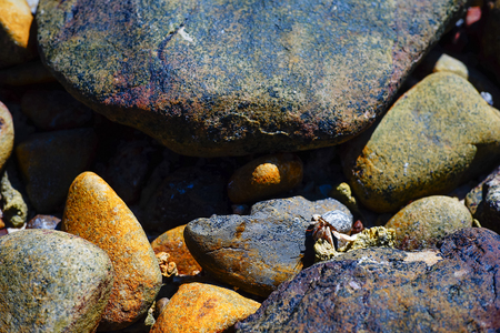 Crab hermit on pebble beach and sea