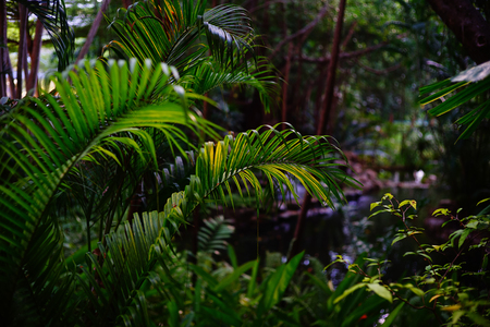 Tropical forest in Thailand