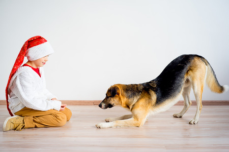 Christmas with a dog