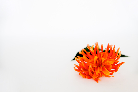 An image of a flower on white background