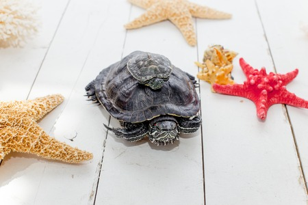 an image of a pet turtle on a white table
