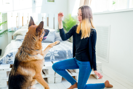 a portrait of a girl training her dog at home Standard-Bild - 112661882