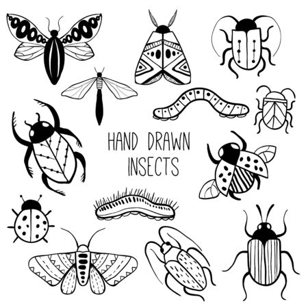 Set of hand drawn insects. Beetle, butterfly, moth collection in outline style. Isolated on white. Hand drawn doodle vector set. Black and white illustration