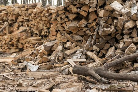 a pile of firewood lies in the forest. beautiful forest landscape