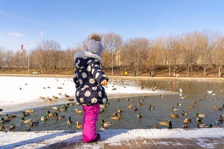 little girl in a hat with a boumbon, a polka-dot jacket and pink pants feeds wild ducks on a pond in winter. child stands with his back