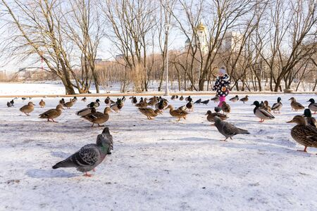 little girl 3-4 years old in pink pants, a jacket and a hat holds a loaf in his hand and feeds ducks and pigeons in a city park in winter