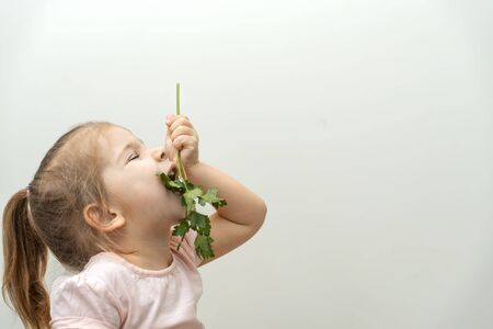 a three-year-old girl holds a sprig of parsley on her outstretched arm and bites off the greens. light smooth background. profile view. large copy space Banco de Imagens