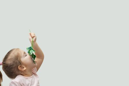 a three-year-old girl happily eats a sprig of parsley. side view, large free space