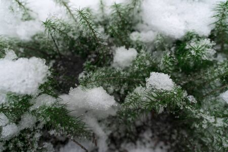 moss covered in snow. snow winter background Фото со стока