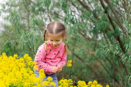 cute little girl in a pink sweater admires spring yellow flowers