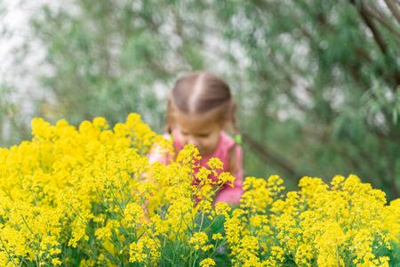 yellow bushes Real bedstraw in the foreground, in the distance a girl in blur