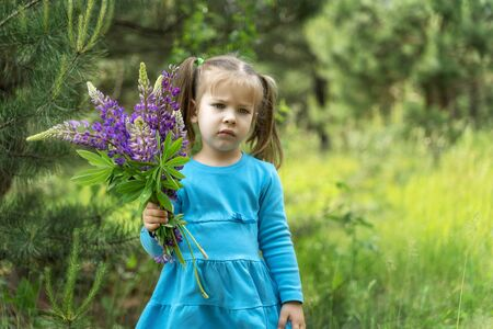 a child with a bouquet of lupins does not want to be photographed. the girl in the bare dress is sad and not happy Stock Photo