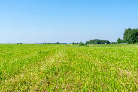 rural landscape of central Russia. mowed field on a summer sunny day