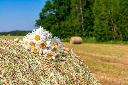 a bouquet of daisies on a haystack on a summer sunny day