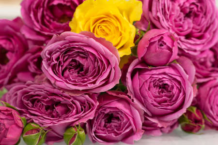 floral background of pink roses. one yellow rose. not like everyone else