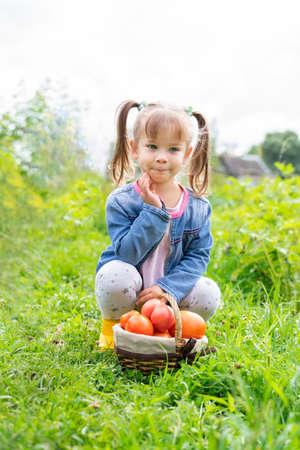 child girl with a basket full of ripe tomatoes. harvest concept