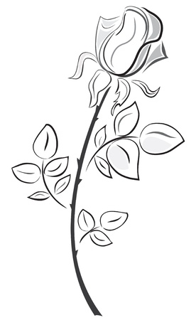 single rose: Rose in hand drawn style