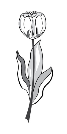 single line: Black and white tulip illustration in hand drawing style