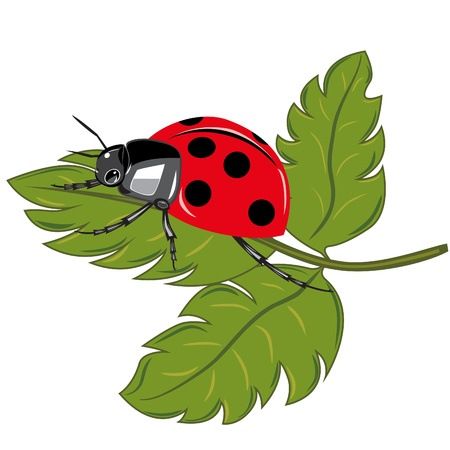 Ladybird sitting on the green leaf illustration  Vector
