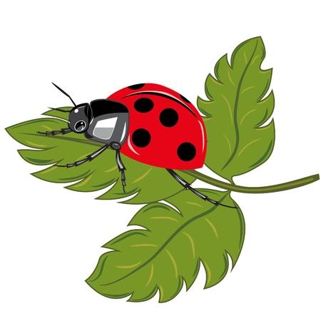 lady bug: Ladybird sitting on the green leaf illustration  Illustration